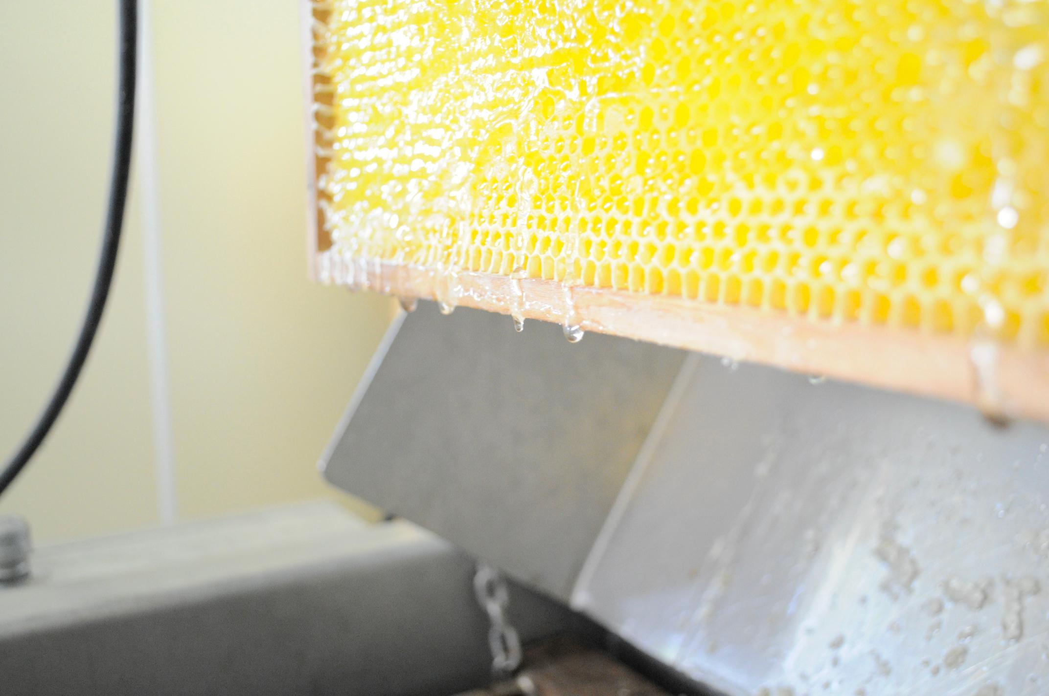 Honigwabe bei Honigernte